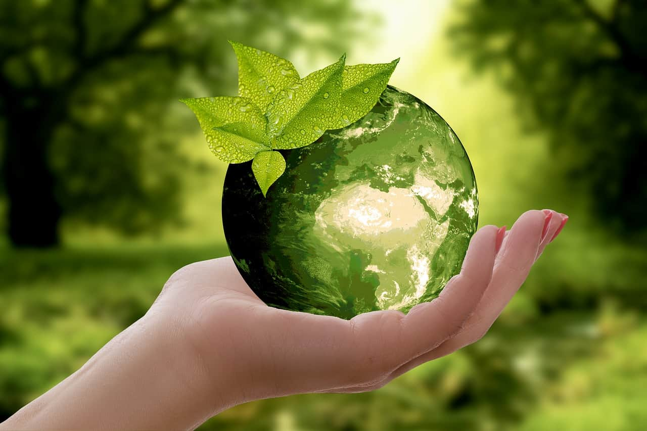 Cultura-eco-friendly-qué-debes-saber-sobre-ella